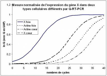 Télécharger exercice rt pcr PDF | pcr amplification,biologie